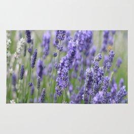 Lavender in field Rug