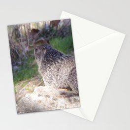 North American Beaver in the Wild, Nature, Animal, Beaver Stationery Cards