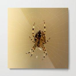 Spiderism  Metal Print