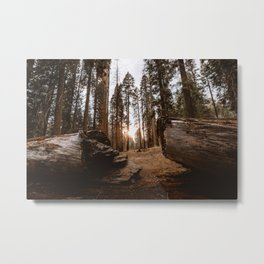 Light Between Fallen Sequoias Metal Print