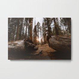 Light Between Fallen Sequoias Metal Print