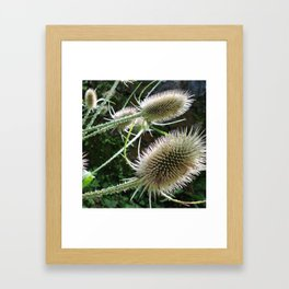 Teasels  Framed Art Print