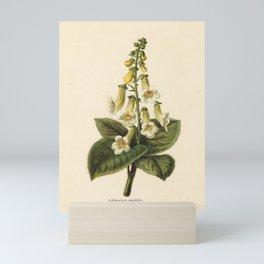 1800s Encyclopedia Print of Flower (Achimenes Amabilis) Mini Art Print