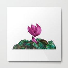 Cyclamen watercolour Metal Print