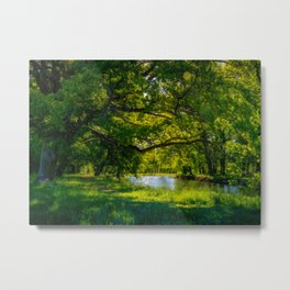 Summer Morning in the Park Metal Print