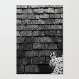 Grey.  Canvas Print