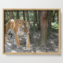 Bengal Tiger On The Prowl Serving Tray