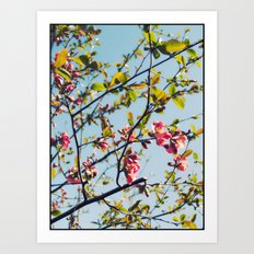 Spring Time Blossoms Art Print