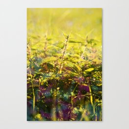 Stinging Nettle Lights Canvas Print