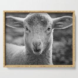 Lamb's portrait Serving Tray