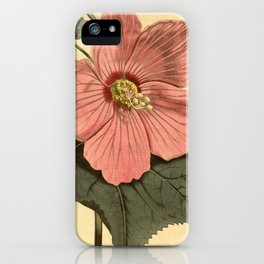 Vintage Illustration of a Hibiscus Flower (1806) iPhone Case