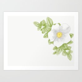 Cherokee Rose Art Print