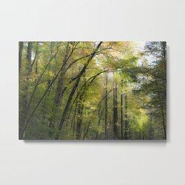 Trees in October Metal Print