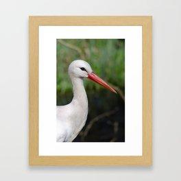 White stork Framed Art Print