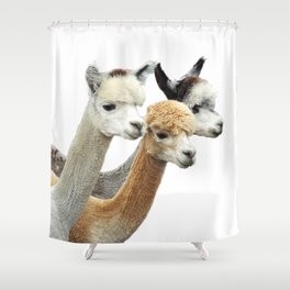 Alpaca Trio Shower Curtain