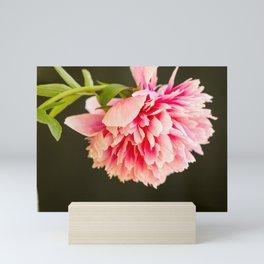 Peony flower Mini Art Print