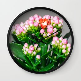 Orange Kalanchoe flower opening standing out from pink buds close-up Wall Clock