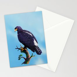 Verreaux's Eagle  Stationery Cards