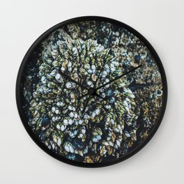 Mussel Cluster Wall Clock