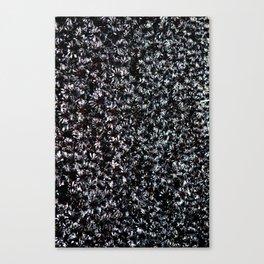 Fields of Black Aeonium 'Zwartkop' Canvas Print