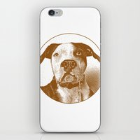 pit bull iPhone & iPod Skins featuring Pit Bull by George Peters