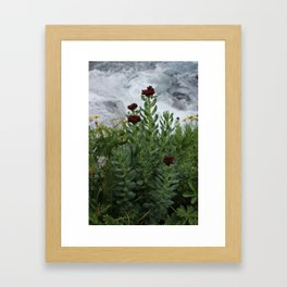 Flower against a white stream. Framed Art Print
