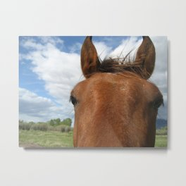 Dolly the lovely horse Metal Print