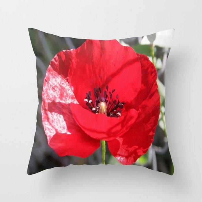 Single Red Poppy Flower  Throw Pillow