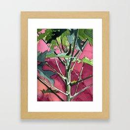 A Little Papaya Tree Framed Art Print