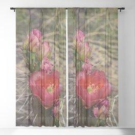 Cacti in Bloom - 4 Sheer Curtain