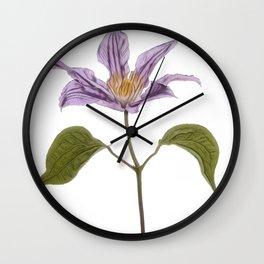 Clematis buttercup family Ranunculaceae garden hybrids jackmanii flowers Wall Clock