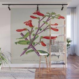 Penstemon Baccharifolius Vintage Botanical Floral Flower Plant Scientific Wall Mural