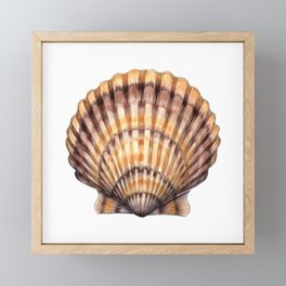 Bay Scallop Framed Mini Art Print