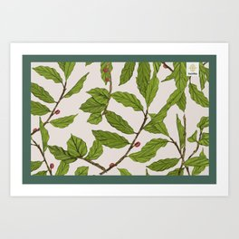 Toraja Sesean Coffee Plant Art Print