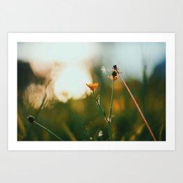 Shine #2 Art Print