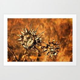 Dried Suns Art Print