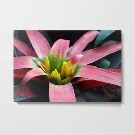Bromeliad Plant Metal Print