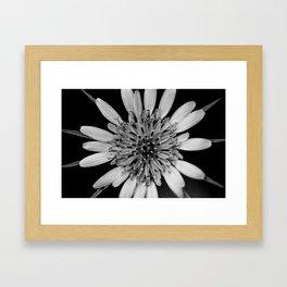Black & White Beauty Framed Art Print