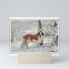 St Bernard dog in the snow Mini Art Print