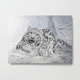 panthera uncia Metal Print