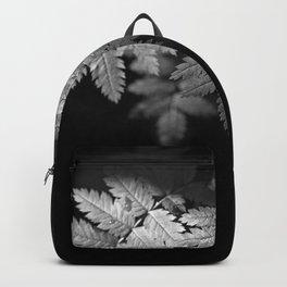 Ferns on Black Backpack