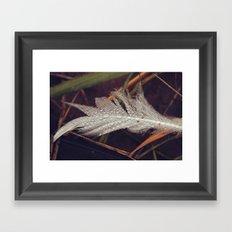 Beach Feathers 3 Framed Art Print