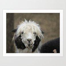 Funny alpaca Art Print