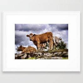 Heifer Framed Art Print