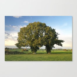 Two Trunk Tree Canvas Print