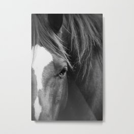 A Horse's Stare Metal Print