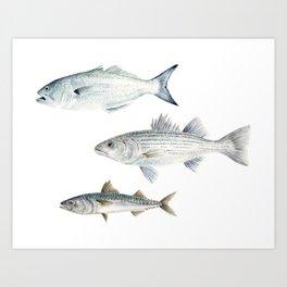 New England Fish Trio Art Print