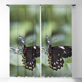 Female Birdwing Butterfly Blackout Curtain
