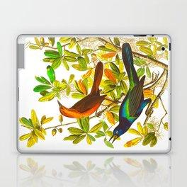 Colorful Feathers Laptop & iPad Skin