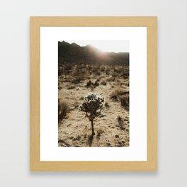 Cholla Cactus in Joshua Tree National Park Framed Art Print
